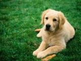 Імуномодулятори для собак: список препаратів