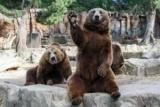 Зоопарк в Тюмені: прогулянки в сосновому бору