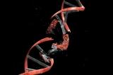 Індуковані мутації: загальні відомості, причини, приклади