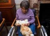 Терапія тваринами: ефект і приклади лікування